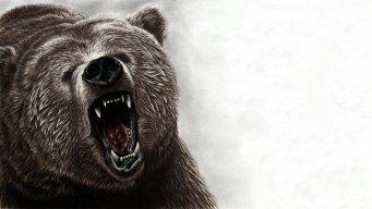 Brotastic Bear